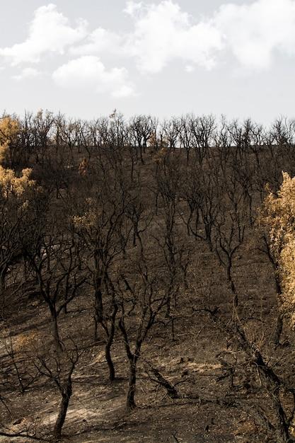 Restos de um incêndio florestal Foto Premium