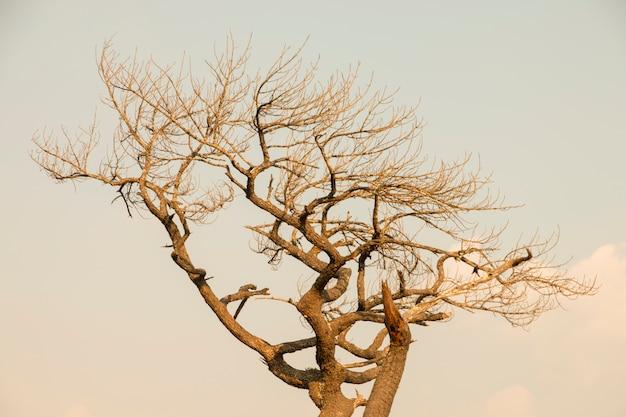 Resumo seco de ramo de árvore com espaço de texto livre Foto Premium
