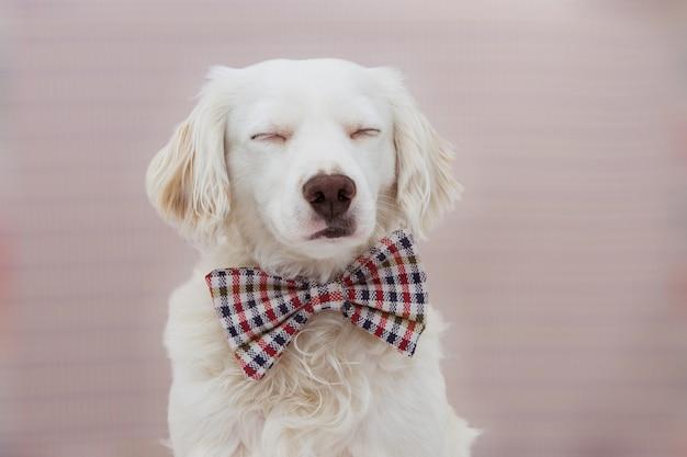 Retrato cão elegante celebrando um aniversário, carnaval ou aniversário Foto Premium