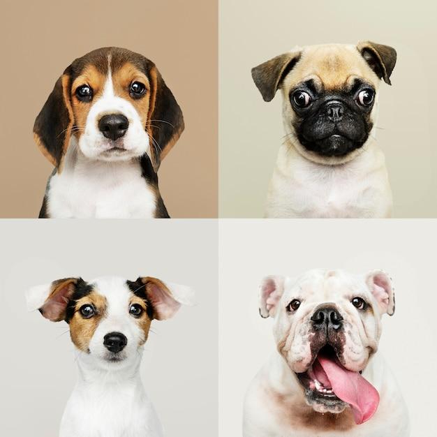 Retrato, cobrança, de, adorável, filhotes cachorro Foto gratuita