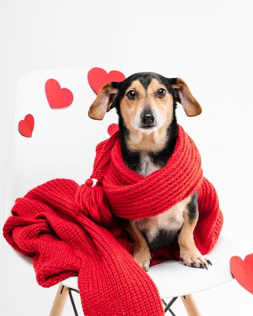 Retrato de adorável cachorrinho coberto com um lenço Foto gratuita
