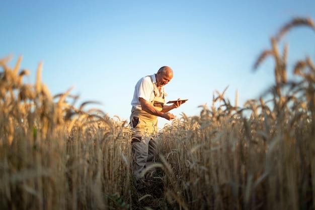 Retrato de agricultor agrônomo sênior no campo de trigo, verificando as colheitas antes da colheita e segurando um computador tablet Foto gratuita