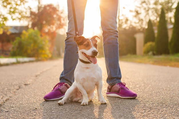 Retrato de cachorro adorável ao ar livre Foto gratuita