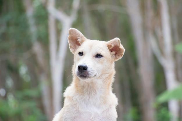 Retrato de cachorro com a natureza Foto Premium