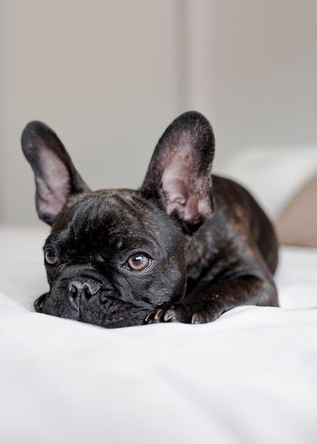 Retrato de cachorro pequeno bonito descansando Foto gratuita