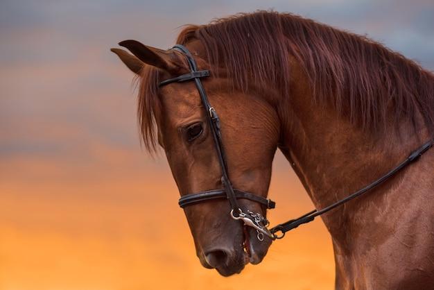 Retrato de cavalo ao pôr do sol Foto Premium