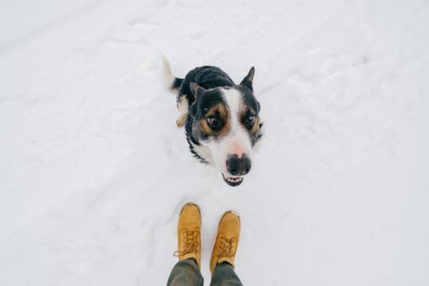 Retrato de cima do amigo humano amável do `s - cão fiel que olha acima no vencedor com o focinho de sorriso engraçado. cachorrinho adorável bonito mostrando a língua e esperando a comida. animal de estimação feliz no inverno em pé na neve. Foto Premium