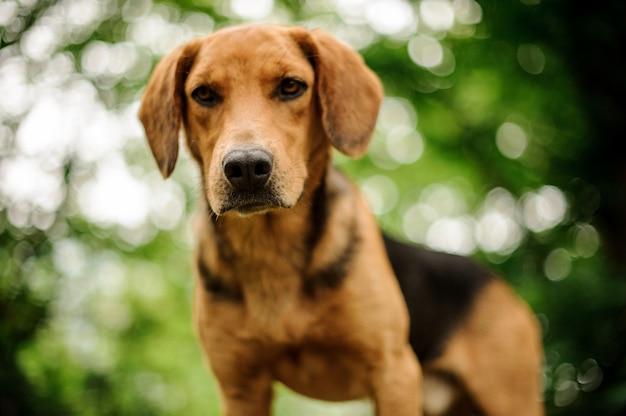 Retrato de filhote de cachorro marrom em pé na floresta Foto Premium