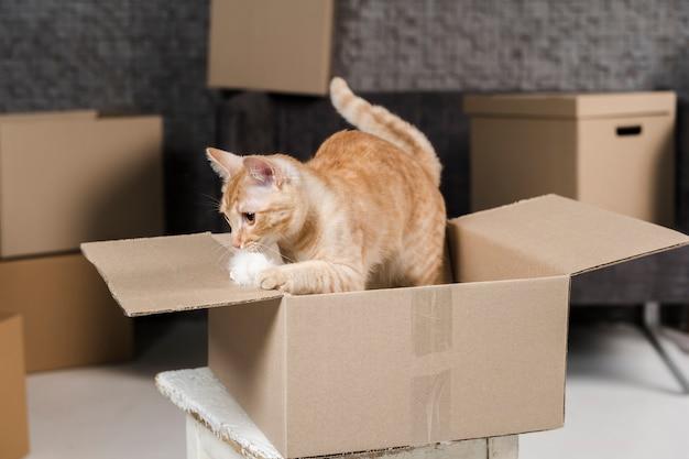 Retrato de gato adorável dentro de caixa de papelão Foto gratuita
