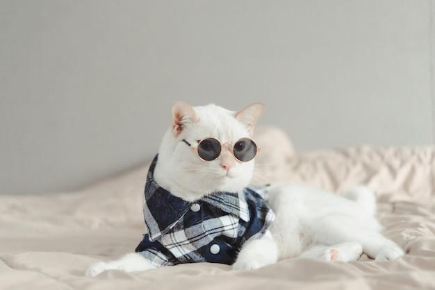 Retrato, de, gato branco, desgastar, óculos Foto Premium