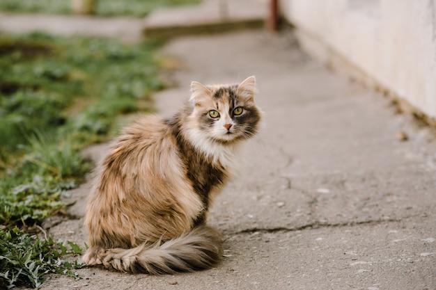 Retrato de gato multicolor com olhos verdes Foto Premium