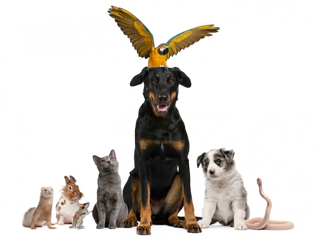 Retrato de grupo de animais na frente de fundo branco Foto Premium