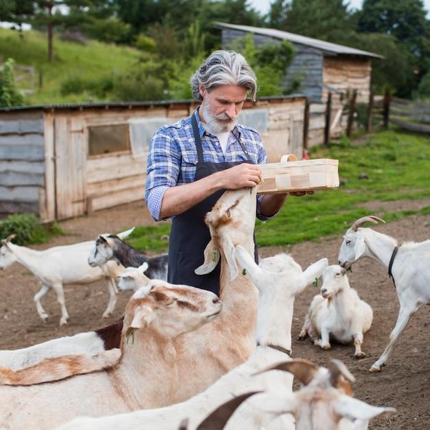 Retrato de homem alimentando cabras Foto gratuita