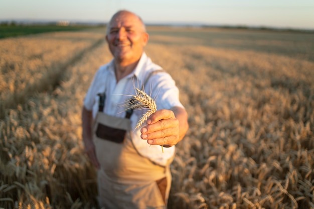 Retrato de um agricultor agrônomo bem-sucedido em um campo de trigo segurando safras de trigo Foto gratuita