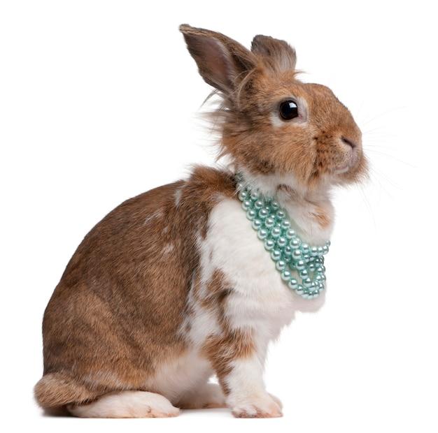 Retrato de um coelho europeu usando colares de pérolas Foto Premium
