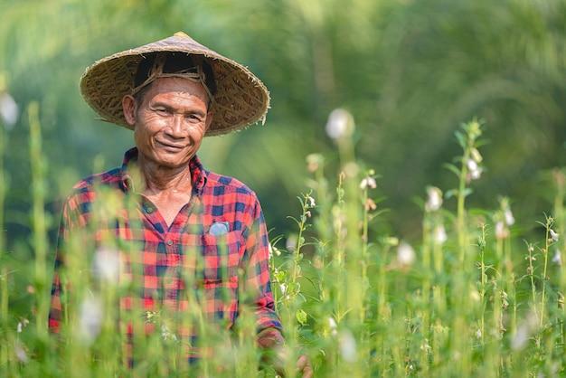 Retrato de um fazendeiro asiático sênior feliz no jardim do gergelim. Foto Premium