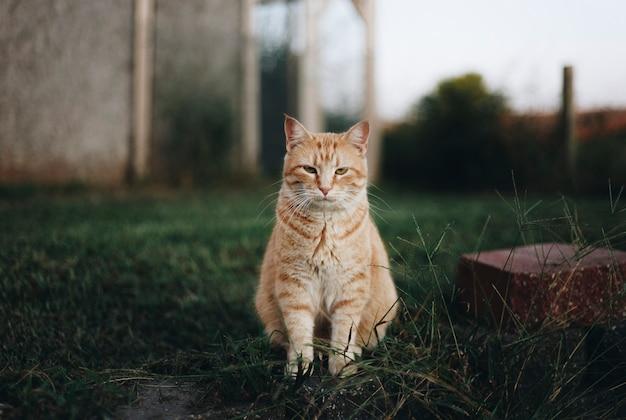 Retrato de um gato Foto gratuita