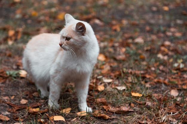 Retrato do close-up do gatinho novo branco pequeno do gato do gengibre adorável engraçado bonito com os olhos fechados que sentam o sonho dormindo ao ar livre. Foto Premium