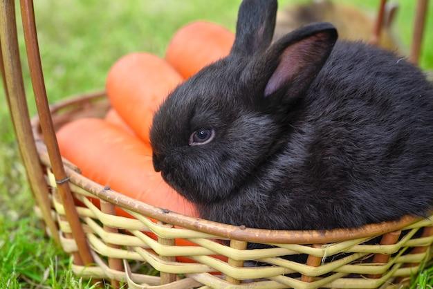 Retrato do coelho bonito com cenoura na cesta de madeira. Foto Premium