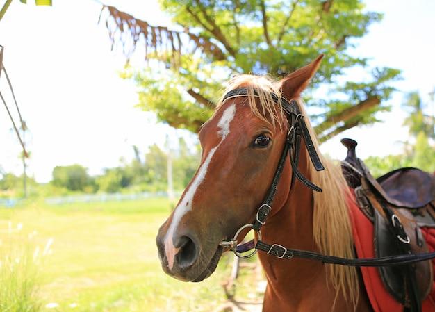 Retrato próximo acima da cara de um cavalo novo. Foto Premium