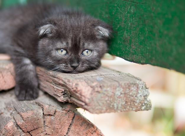 Retrato triste do gato Foto Premium