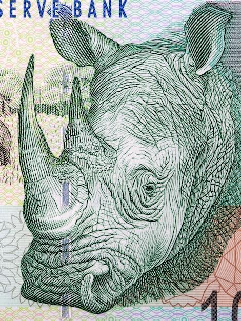 Rinoceronte, um retrato de dinheiro sul-africano Foto Premium