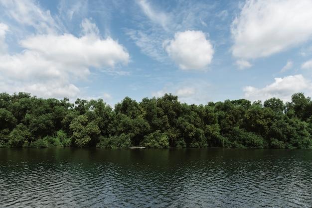 Rio e floresta tropical Foto gratuita