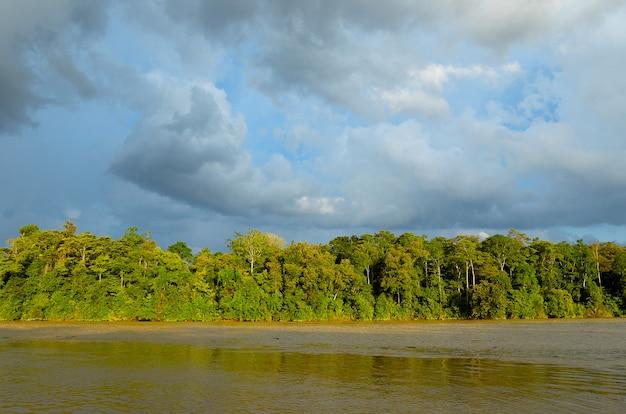 Rio kinabatangan, malásia, floresta tropical da ilha de bornéu Foto Premium