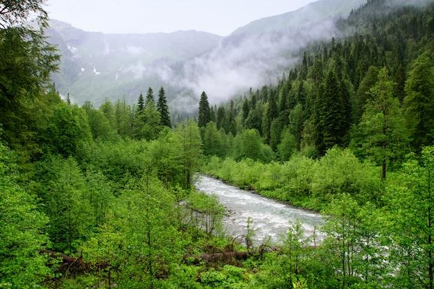 Rios da montanha da abkhazia Foto Premium