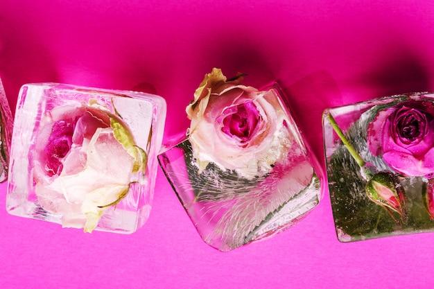 Rosa congelada Foto gratuita