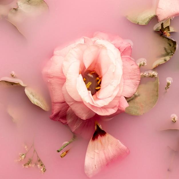Rosa rosa em close-up de água-de-rosa Foto gratuita