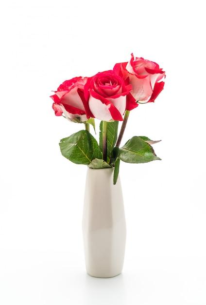Rosa vermelha em fundo branco Foto Premium
