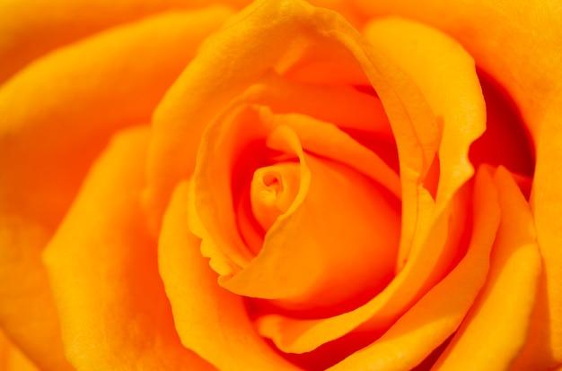 Rosas borradas com fundo borrado Foto Premium