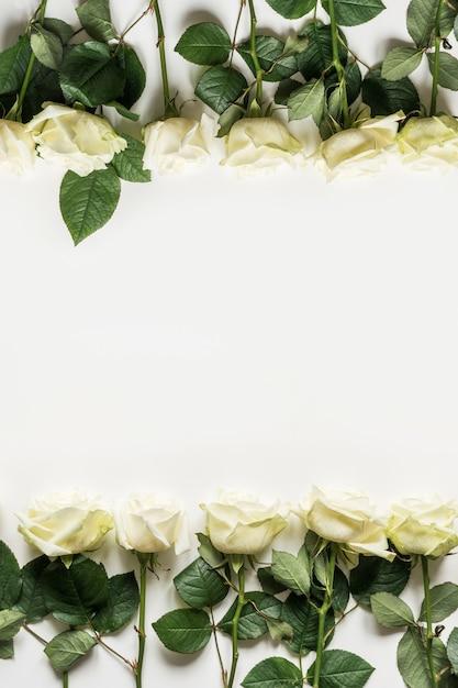 Rosas brancas como moldura em branco Foto Premium