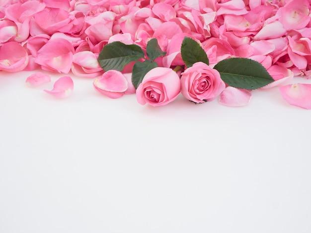 Rosas cor de rosa em fundo branco. Foto Premium