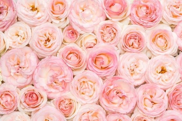 Rosas cor de rosa em um canteiro de flores Foto Premium