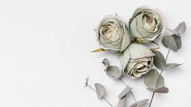 Rosas de vista superior com espaço para texto Foto gratuita