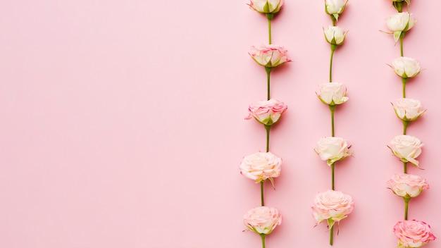 Rosas em linhas e colunas vista superior com espaço de cópia Foto gratuita