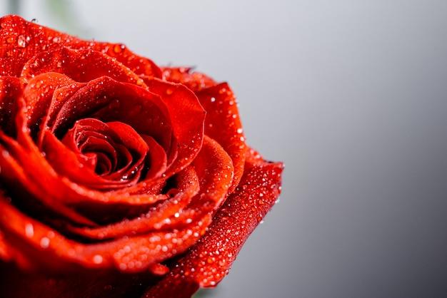 Rosas Vermelhas Com Papel De Parede De água Com Gás Foto