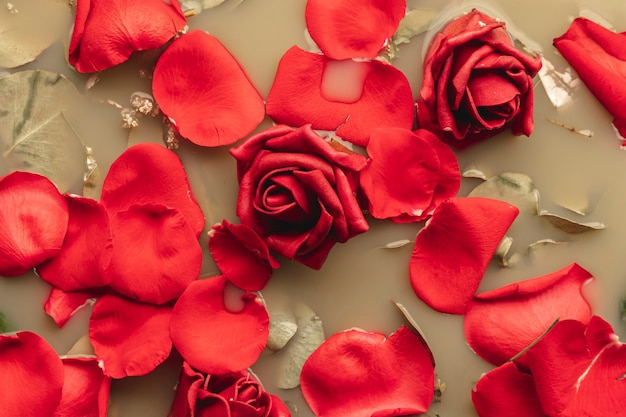 Rosas vermelhas de vista superior na água de cor castanha Foto gratuita