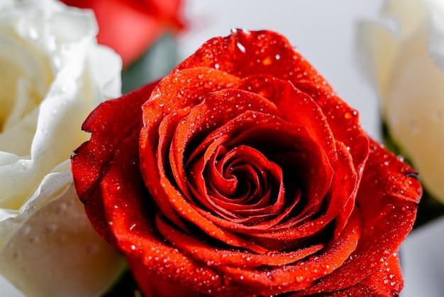 Rosas Vermelhas E Brancas Com Papel De Parede Da água