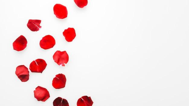 Rosas vermelhas Foto gratuita