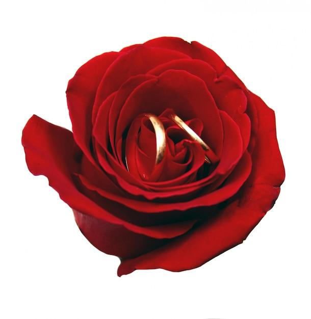 Rose e alianças de casamento Foto Premium