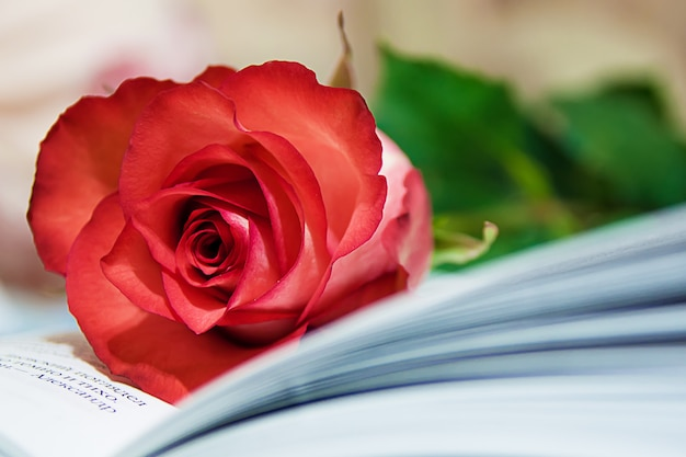 Rose e livro Foto Premium