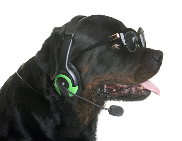 Rottweiler e fones de ouvido Foto Premium