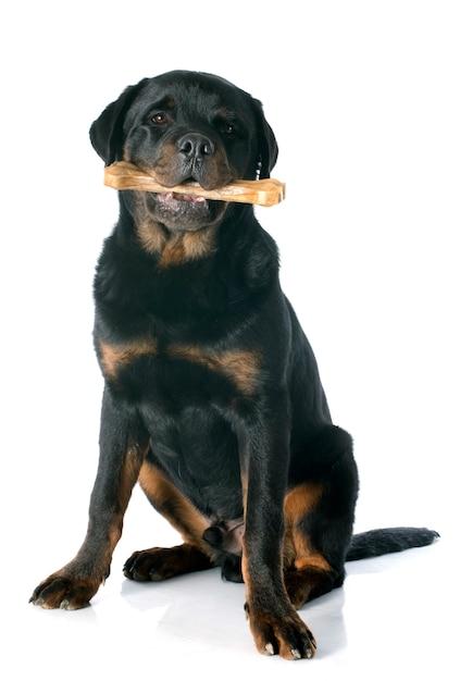 Rottweiler e osso novos Foto Premium