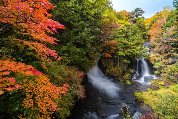 Ryuzu waterfall floresta de outono nikko japão Foto Premium