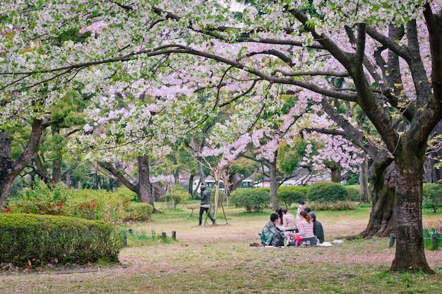 Sakura árvore no parque Foto Premium