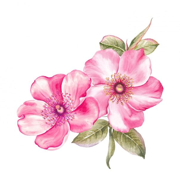 Sakura em aquarela Foto Premium
