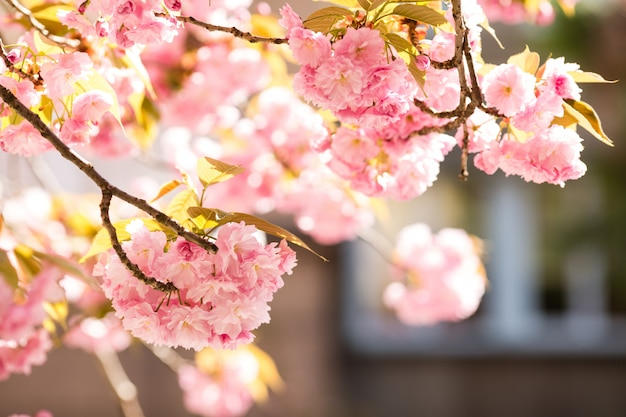 Sakura flores de cerejeira japão Foto Premium